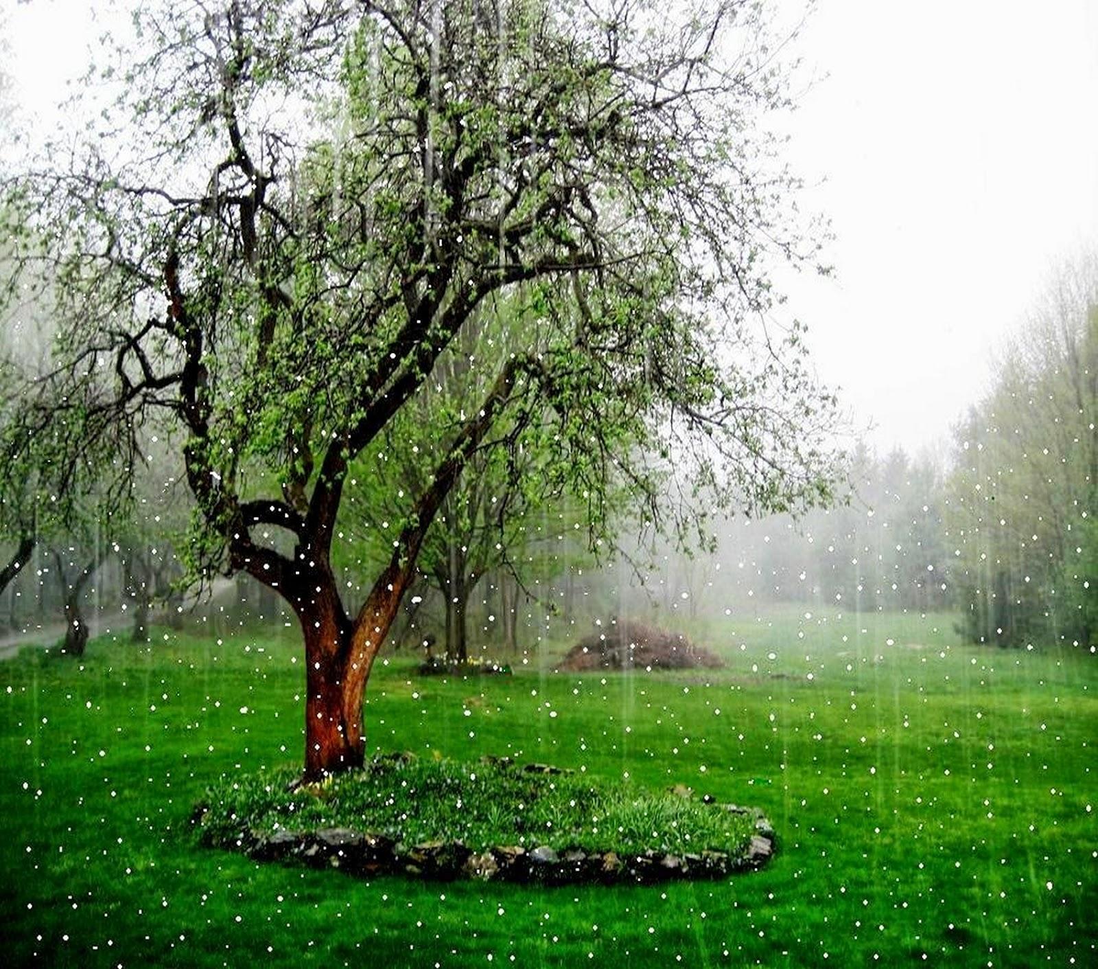 Beautiful-Rain-Falling whatsapp dp - Tech PC Tricks